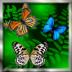 花蝴蝶动态壁纸 V1.1