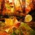 秋天动态壁纸 V
