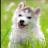 宠物趣图 V1.0