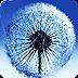 蒲公英S3动态壁纸汉化版 Water Dandelion LWP