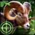 荒野猎手无限金币版 Wild Hunter