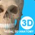 维萨里3D解剖