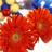 潘多拉桌面之教师节快乐主题 V1.0.0