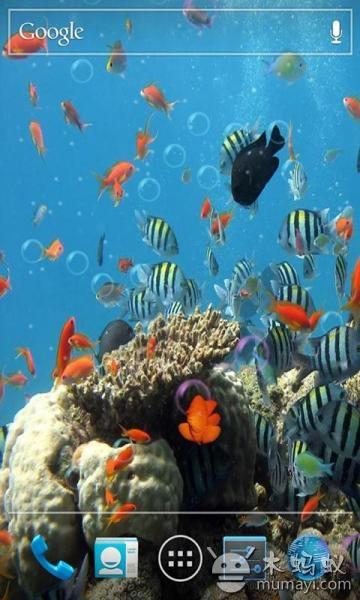 高清的动感海底世界画面让您手机更加高雅温馨,有n多张高清动感海底