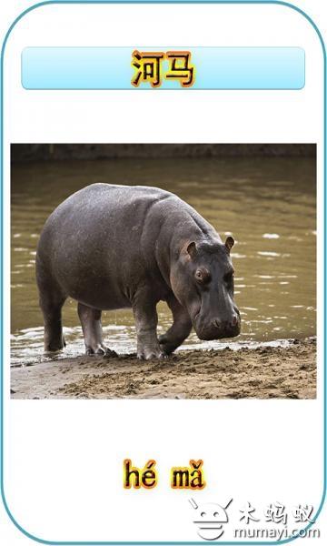 幼儿动物识图2
