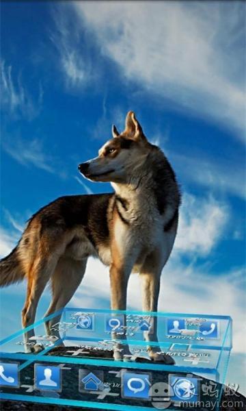 国家宝护动物图片