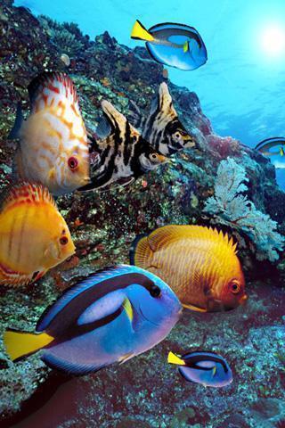 海底世界的珊瑚和海洋鱼类都在这里,让您享受这些漂亮的壁纸.