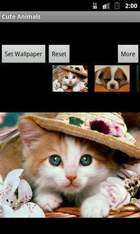 可爱动物壁纸下载_可爱动物壁纸手机版下载_可爱动物