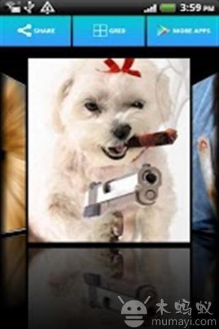 可爱的动物壁纸v2.1_主题壁纸