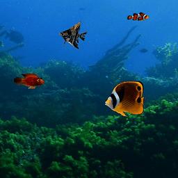会游动的鱼壁纸_一个有金鱼游动的动态桌面-有什么app或动态壁纸可以模拟会动的 ...