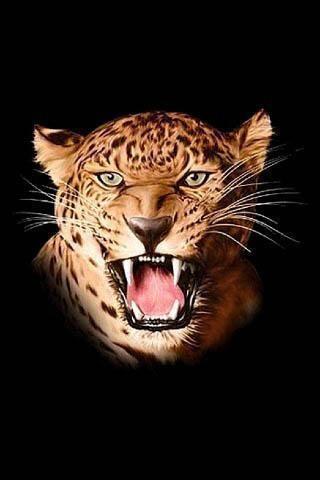 狮子和老虎壁纸下载_狮子和老虎壁纸手机版下载