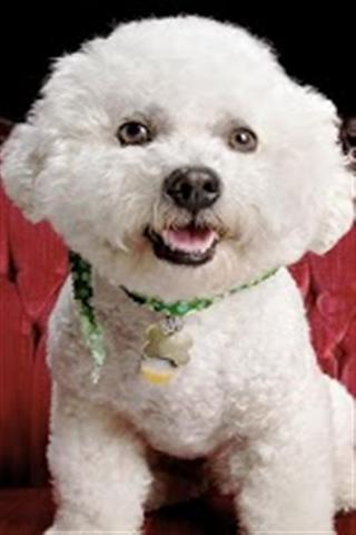 可爱狗壁纸下载_可爱狗壁纸手机版下载