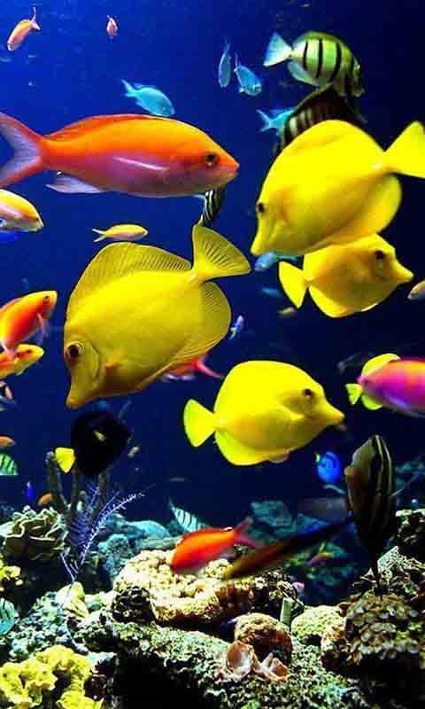 海底世界动态高清壁纸下载_海底世界动态高清壁纸手机