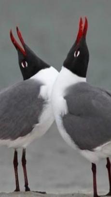 神奇的动物图片 iq游戏下载