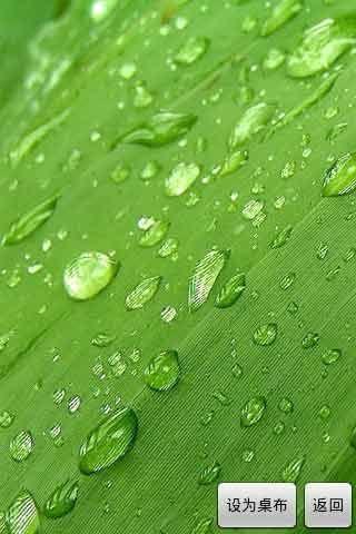 背景 壁纸 绿色 绿叶 设计 矢量 矢量图 树叶 素材 植物 桌面 320_480