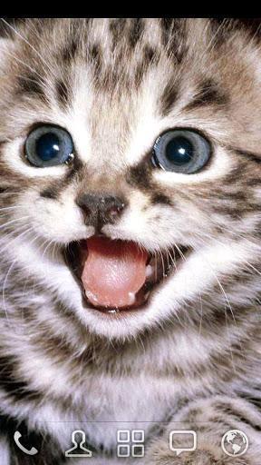 猫咪app1.2.20下载