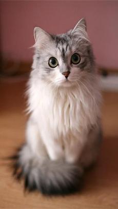可爱萌宠猫咪动态壁纸v1.0_主题壁纸_软件_木蚂蚁安卓