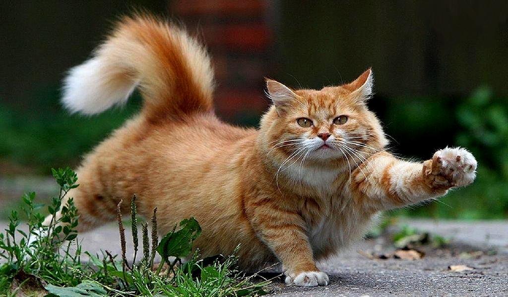 壁纸 动物 猫 猫咪 小猫 桌面 1024_600