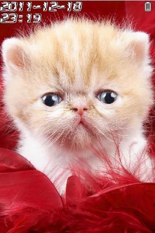 可爱猫咪动态解锁