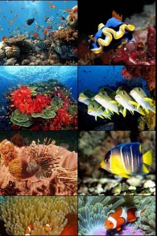 高清海底世界壁紙下載_高清海底世界壁紙手機版下載