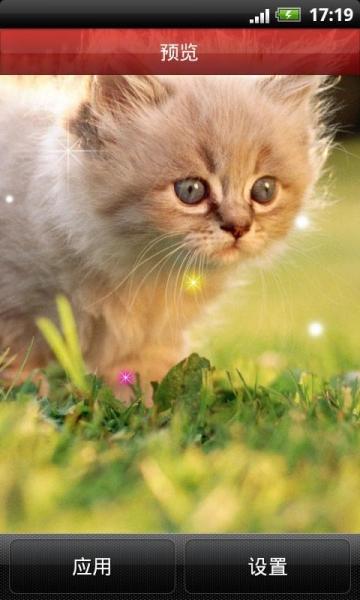 超萌小猫咪动态壁纸收集了数十张可爱小猫咪动态壁纸,可爱的喵星人