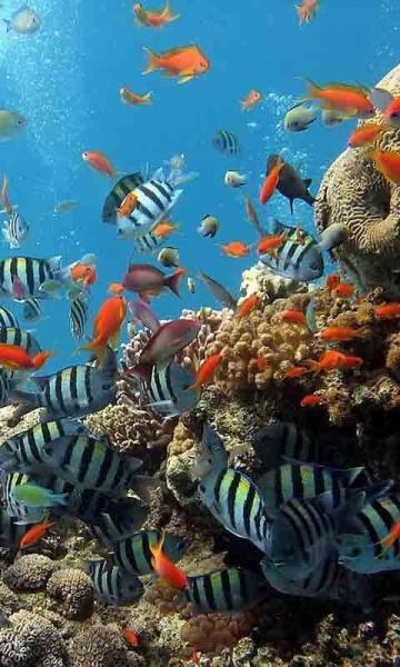 壁纸 海底 海底世界 海洋馆 水族馆 桌面 360_600 竖版 竖屏 手机