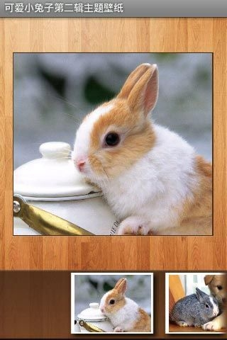 可爱小兔子壁纸下载_可爱小兔子壁纸手机版下载_可爱