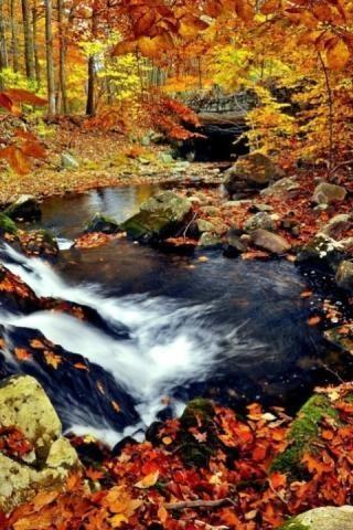 秋季森林3d动态壁纸