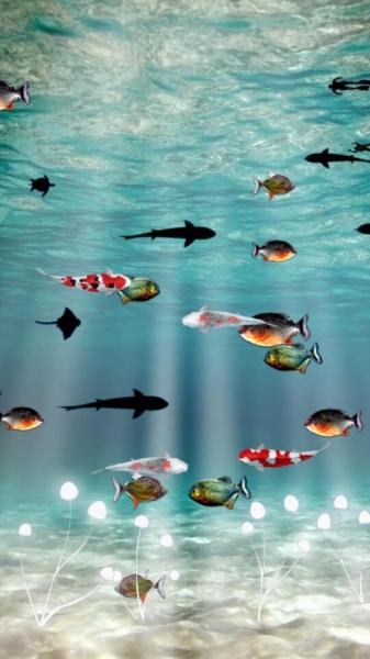 海底世界主题动态壁纸下载_海底世界主题动态壁纸手机