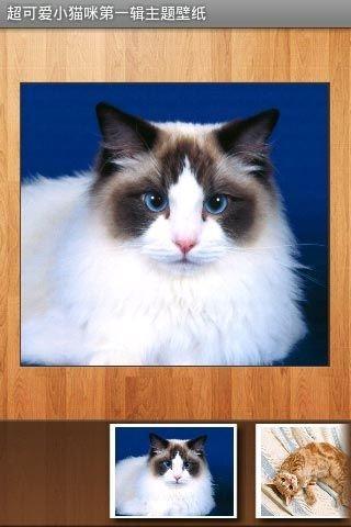 超可爱小猫咪第一辑主题壁纸 v1.0.