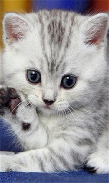 可爱猫咪大图壁纸下载_可爱猫咪大图壁纸手机版下载