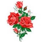 母亲节送花康乃馨鲜花
