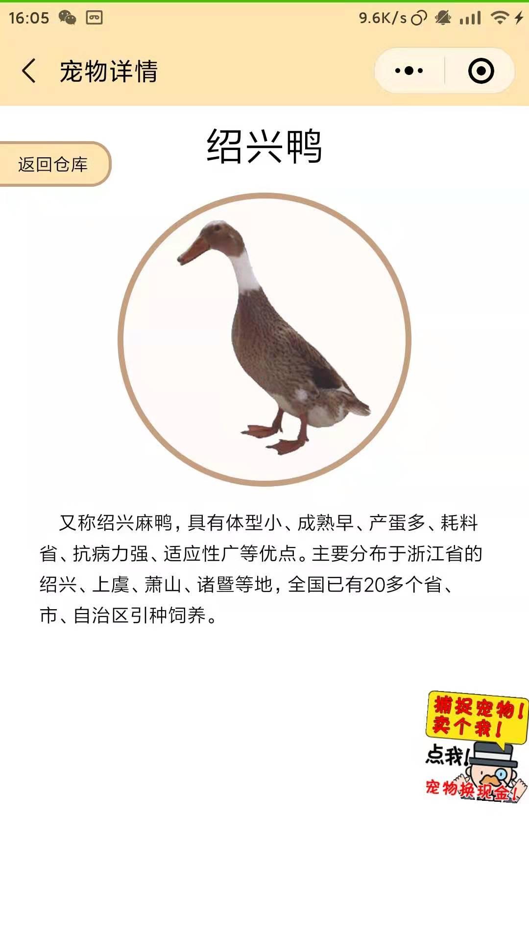 农场鸭席|鸭王是用鸭肉做的吗
